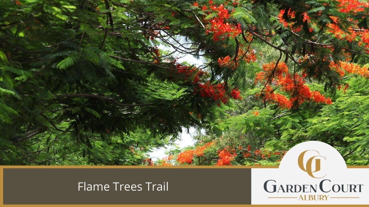 Flame Trees Trail