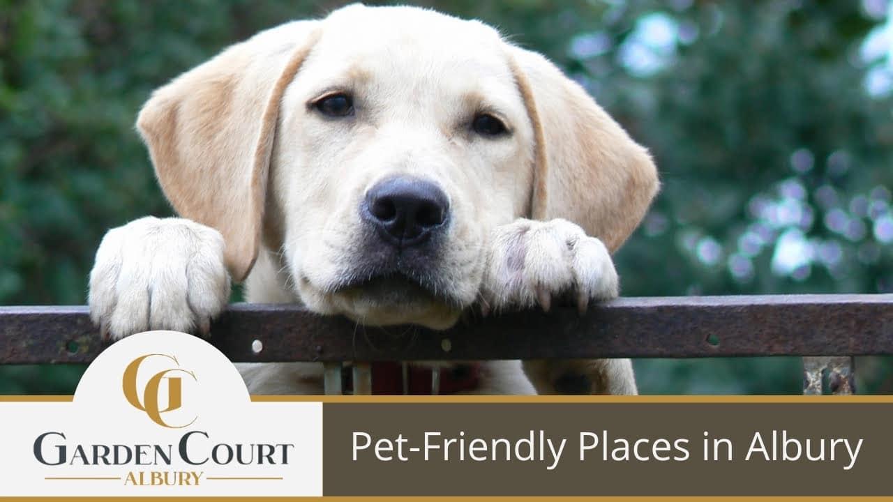Pet-Friendly Places in Albury - Garden Court Motel Albury Accommodation